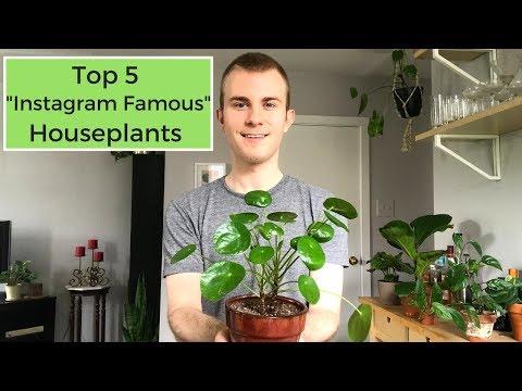 """Top 5 """"Instagram Famous"""" Houseplants"""
