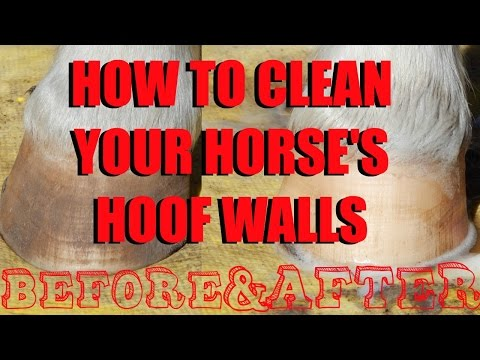 How to Clean Your Horse's Hoof Walls