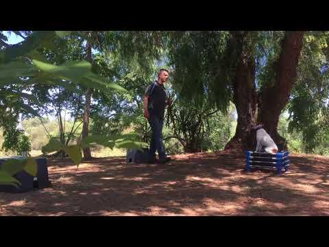 Dog Training San Diego | Wonky | Basenji