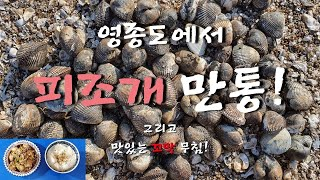 [겨울 승삼이 주간해루질]인천 영종도에서 피조개 만통!…