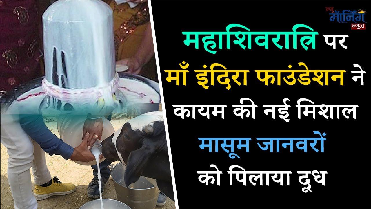 महाशिवरात्रि पर माँ इंदिरा फाउंडेशन के सदस्यों ने कायम की नयी मिसाल - मासूम जानवरो को पिलाया दूध