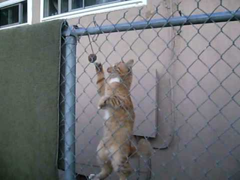 Cat Climbs Fence Youtube