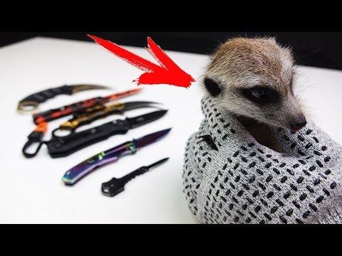 Проверяю БРОНЕ Перчатки с моим Сурикатом и моя Новая коллекция Ножей из Китая !!!