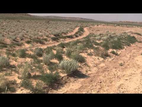 """Hopi Dry Farming"" Ahkima's Field Hopi Reservation"