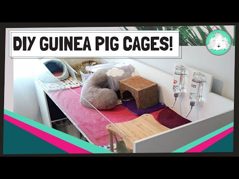 Guinea Pig Indoor C&C and DIY Cages 2020   Build and Design Your Own Custom Cage!