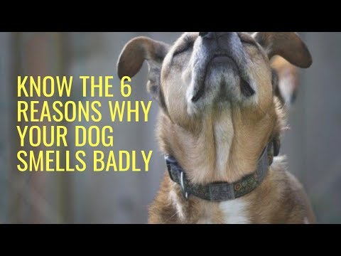 Know The 6 Reasons Why Your Dog Smells Badly