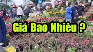 Giá Hoa Cây Cảnh Tại Hoàng Hoa Thám 25 Tháng Chạp