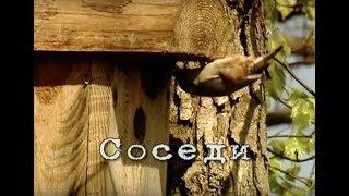 Соседи (Чернобыльские джунгли)(http://www.istockphoto.com/search/lightbox/14231036 English version: http://www.youtube.com/watch?v=uLoS4z4r-9Y Полесский заповедник создан в 1988 ..., 2011-02-12T14:33:02.000Z)