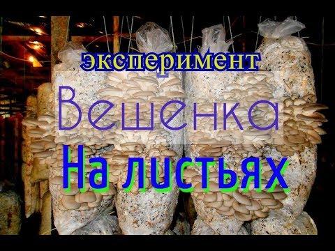 Мицелий грибов на субстрате - купить мицелий в Украине