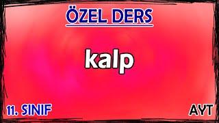 19) Dolaşım Sistemi 1 - Kalp - Özel Ders (11. Sınıf)