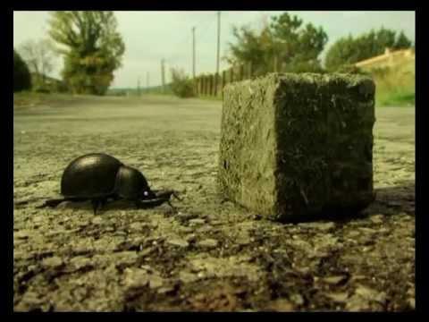 Youtube filmek - Csodabogarak - A galacsinhajtó bánata (2.évad 11.rész)