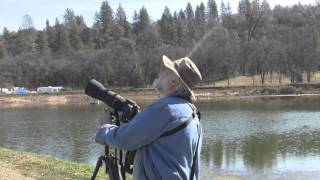 Birding in Nevada County, Part 1