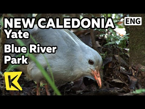 【K】NewCaledonia Travel-Yate[뉴칼레도니아 여행-야테]블루 강 국립공원, 희귀새 카구/Blue River Park/Trekking/Kagu/Yate Lake