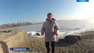 """Владивостокские """"моржи"""" и морские котики устроили заплывы наперегонки"""