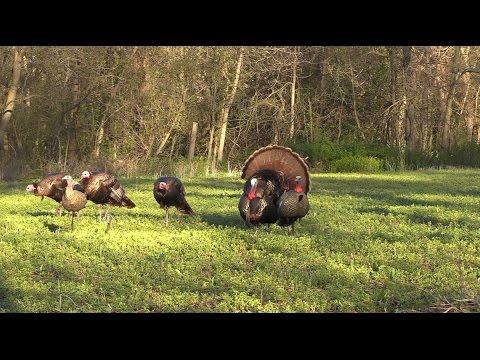 Wisconsin Turkey Hunting