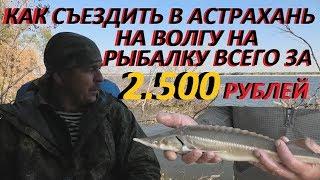 как съездить в Астрахань на нижнюю Волгу на рыбалку всего за 2500 тысячи рублей