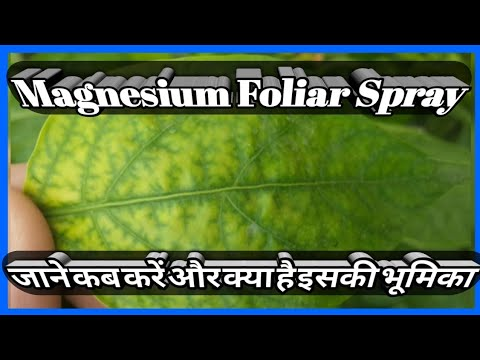 Uses And Role Of Magnesium Foliar Spray ||HIMALAYAN FARMING|| Live Updates