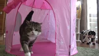 ラブリーテントとねこ。-A cute tent and Maru.-