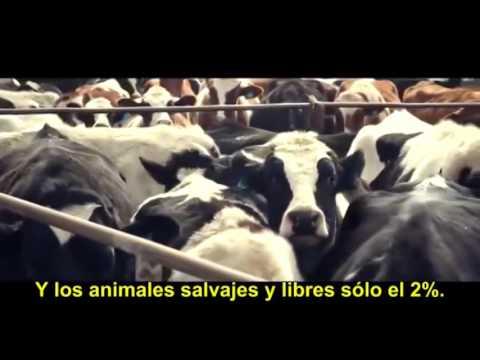 Cowspiracy - Vegetarianismo y contaminación.