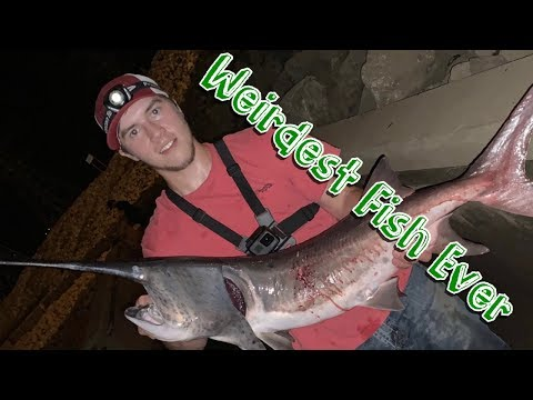 Bowfishing Spoonbill Off The Side Of A Kentucky Dam!