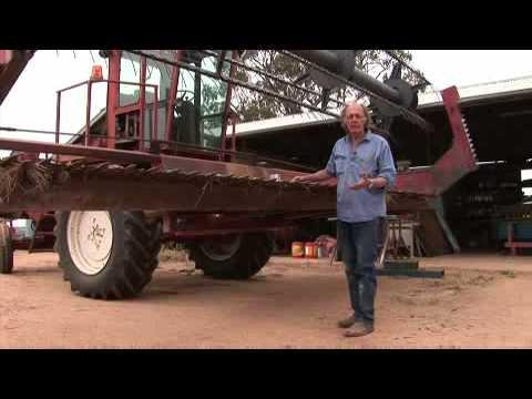 Australia's first GE canola harvest