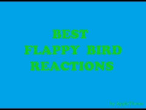 Best Flappy Bird Reactions