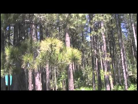 kosmaks cosmos high vibrational tones meditation  for  healings and inner peace with nature videos