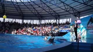 Дельфинарий в Сочи парке(В Сочи парке 1 Мая открылся дельфинарий. В нем обитают 2 дельфина, 1 белуха, и один морской котик. Вы можете..., 2015-05-18T18:43:44.000Z)