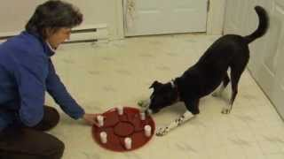 6. Introducing The Scent Training Wheel To A Dog