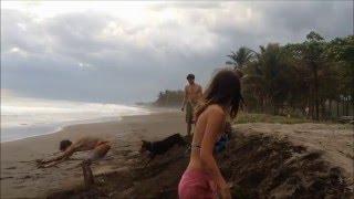 ivhq turtle conservation volunteer trip costa rica