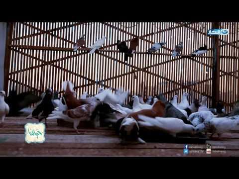 Episode 18 - Hayatna    الحلقة الثامنة عشر - برنامج حياتنا - الرفق ...