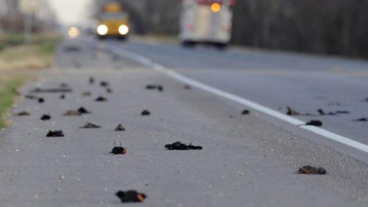 Download Hundreds Of Birds Die After UFO Attack