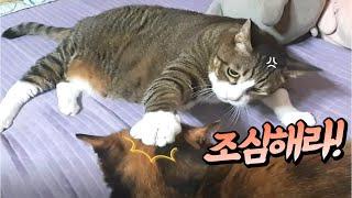(고양이랑친칠라랑) 집사가 먹는 호떡 빼앗아 먹기