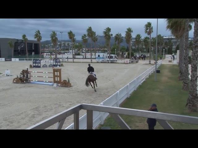 Casall x Carthago gelding b. 2011 (145 Ranking)