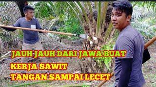 BELAJAR PRUNING SAWIT SAMPAI TANGAN LUKA - LUKA || PEMANEN SAWIT KALIMANTAN!!