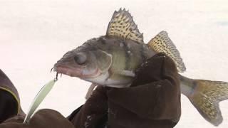 Ловля судака и берша зимой видео