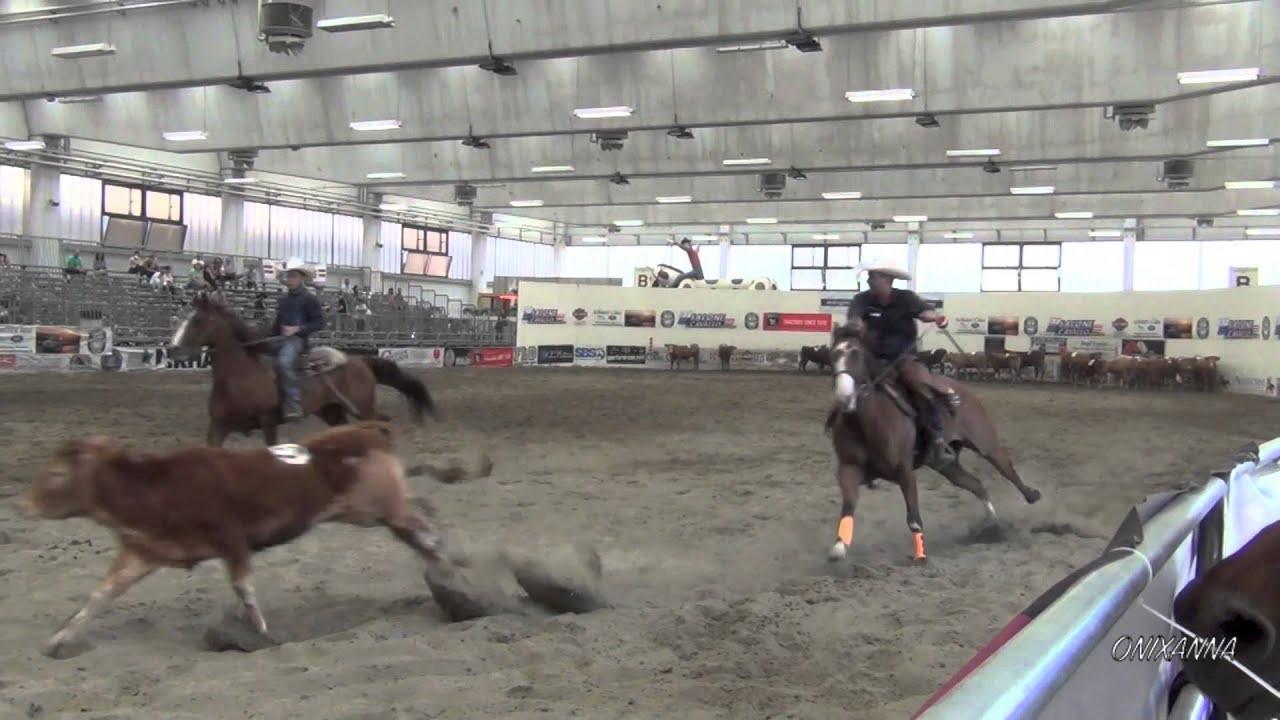 Team Penning Salone Del Cavallo Americano Reggio Emilia 3