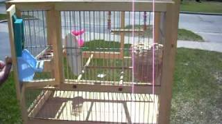 Custom Built Bird Cages - Towa Towa / Canaries / Finches / Small Birds