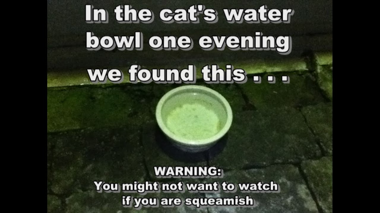 Worms In Cat Water Bowl