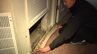 Tenant takes action after mold infestation in apartment complex