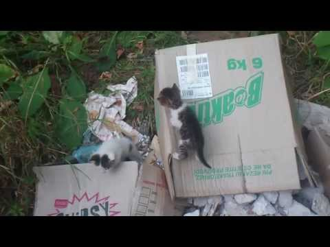 Abandoned kittens in trash