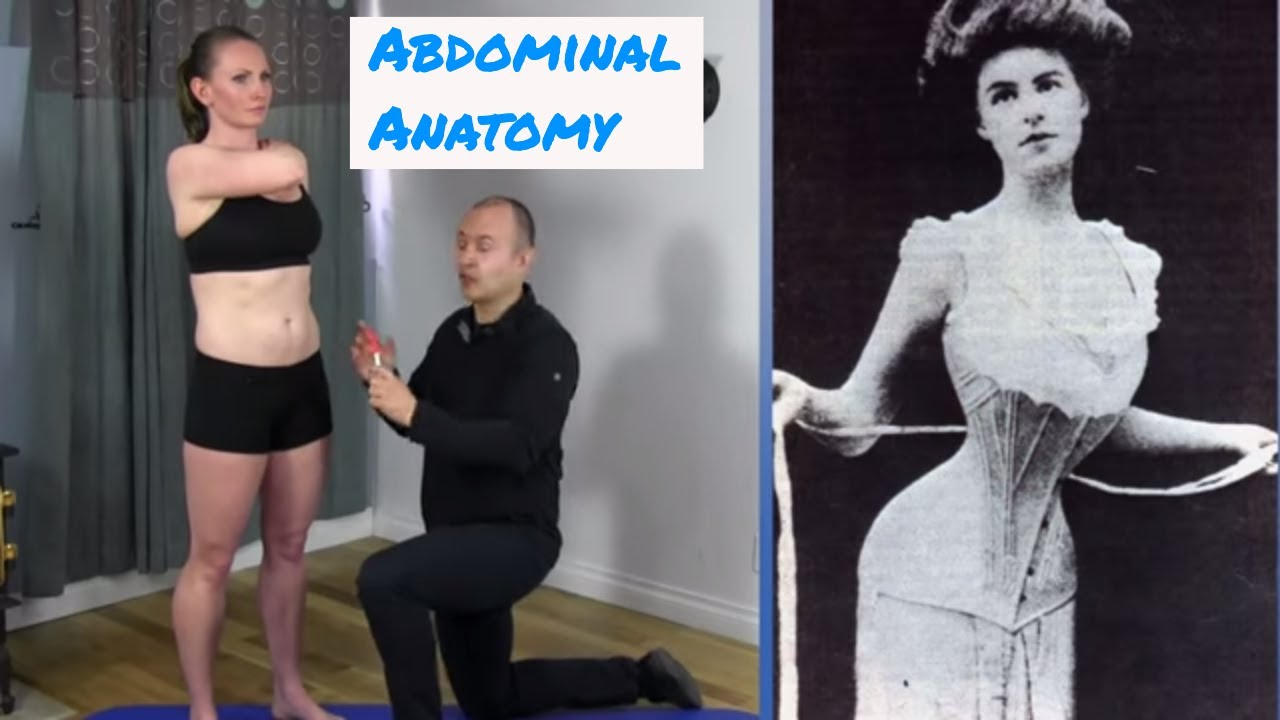 Anatomy of the Abdominal Muscles - YouTube