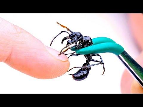 Meine eigene Ameisen Farm mit Königin - Unboxing 🍎