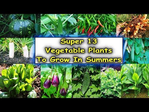 List of Super 13 vegetable Plants to Grow in the Month of February 2020    Growing Organic Vegetable