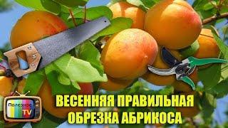 видео Обрезка абрикосов весной схема