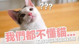 蛋捲:你們都誤會我了!5件被誤解的貓咪行為【好味貓知識】EP11 thumbnail