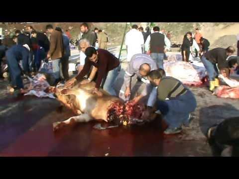 Kurban Kesimi KKB  2  Kesilen başka kurbanlara da baktım.