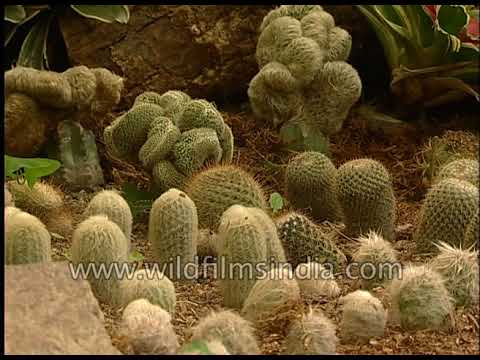 India's best Cactus collection in Sikkim