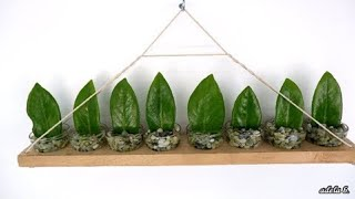 Creative Idea for ZZ Plant Mini Wall Hanging Decor in Small Glass of Water (Zanzibar Gem)
