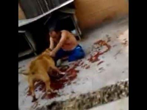 VIDEO OMG: 2 pitbulls atacan a un ladrón, pobre hombre